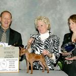 CH. Cheristar's Curtsy In The Sand winning her first major at 6 month of age