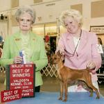 CH. Cheristar's Sandy Sandals winning a 4 point Major. Sandy is owned by Tana Thames, NC